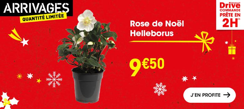 cadeau_noel_bricoleur_plante_rose